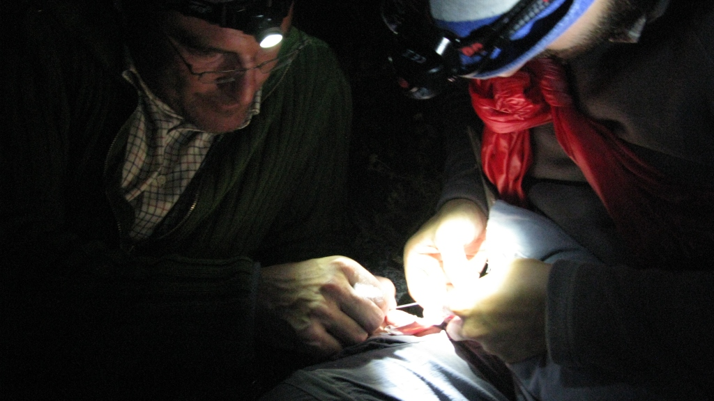 Taking a blood sample from a seabird in Sisargas