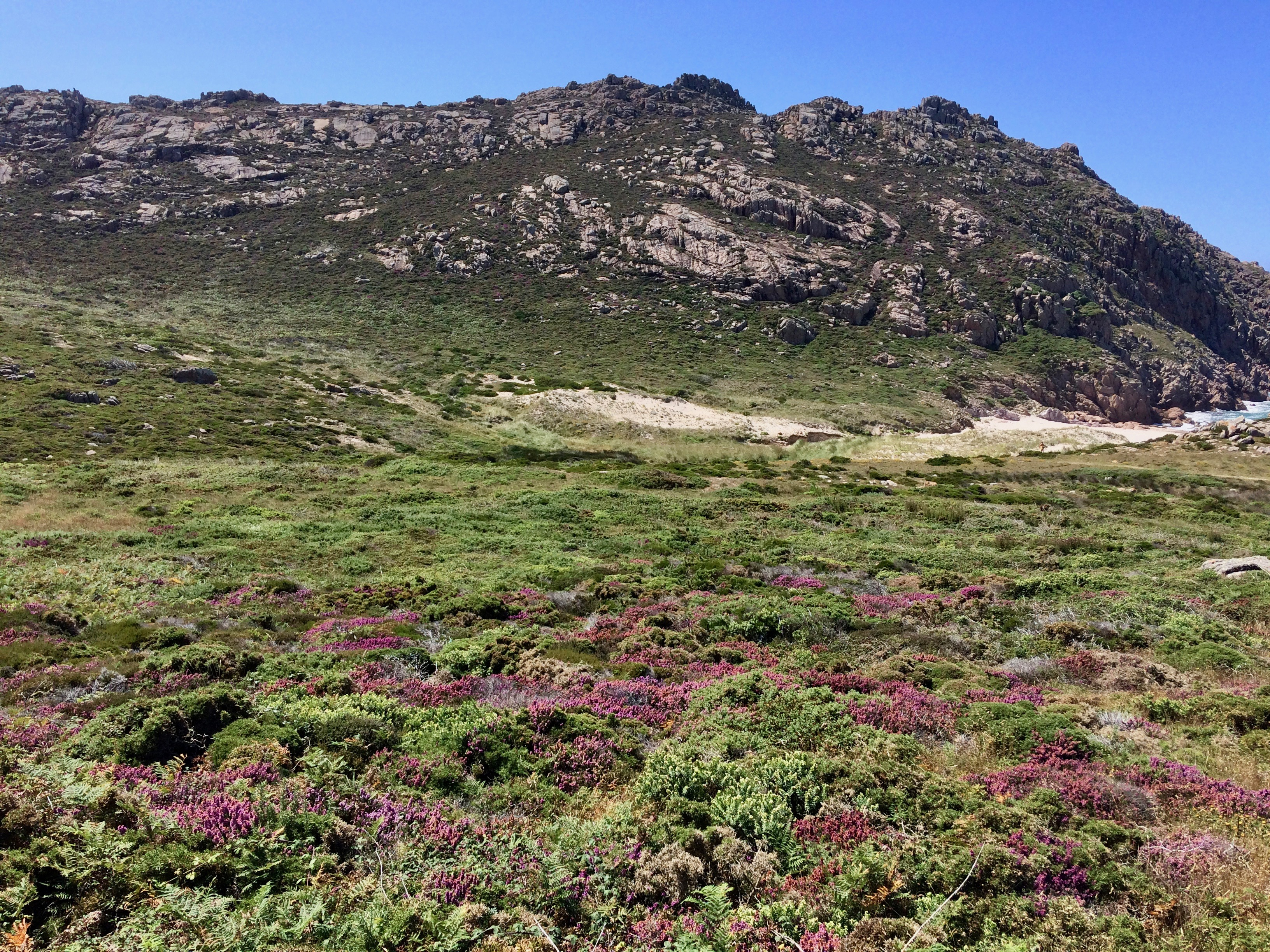 General view of the Portuguese crowberry population at Pedrosa
